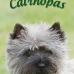 puoti_cairnopas
